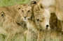 Kenya Safaris Kenya